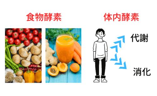 酵素入りスムージーを飲むと、代謝が上がる理由