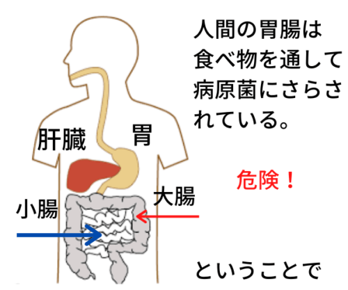 腸管免疫が活性化し、体の外から侵入する病原菌を撃退してくれるから