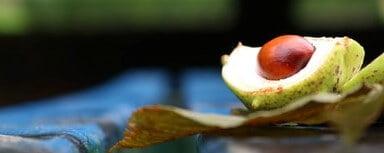 アボカドの種には栄養価の70%が詰まっている