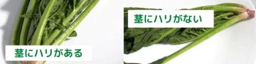 スムージーに使う新鮮な生ほうれん草の選び方
